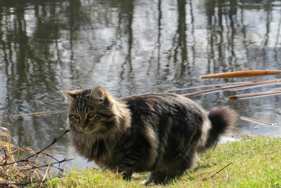 Disappearance alert Cat Female , 2 years Beauzac France