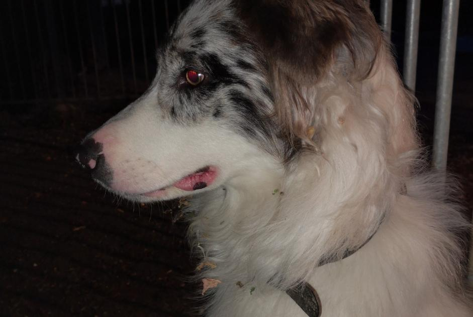 Discovery alert Dog miscegenation Male , Between 9 and 12 months Montdragon France