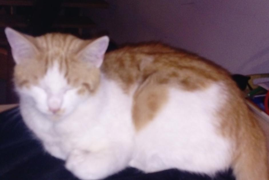 Disappearance alert Cat Male , 2 years Aix-les-Bains France