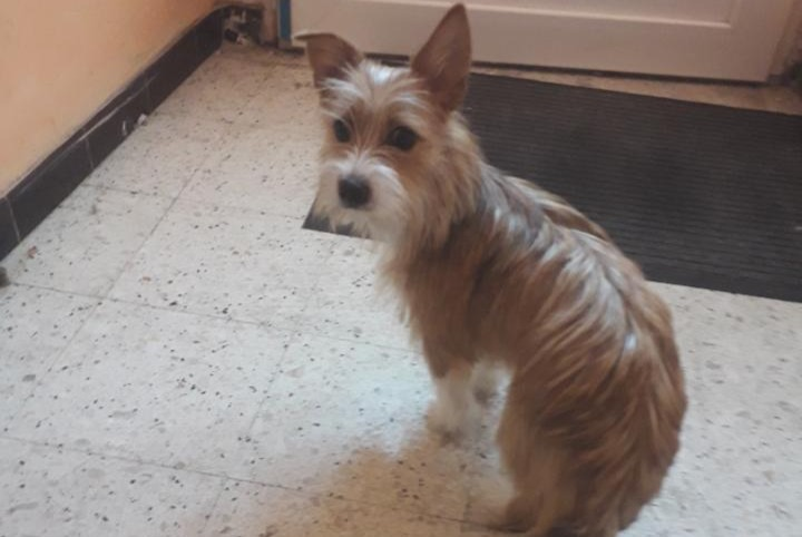 Discovery alert Dog miscegenation Female , 1 year Lamothe-Capdeville France
