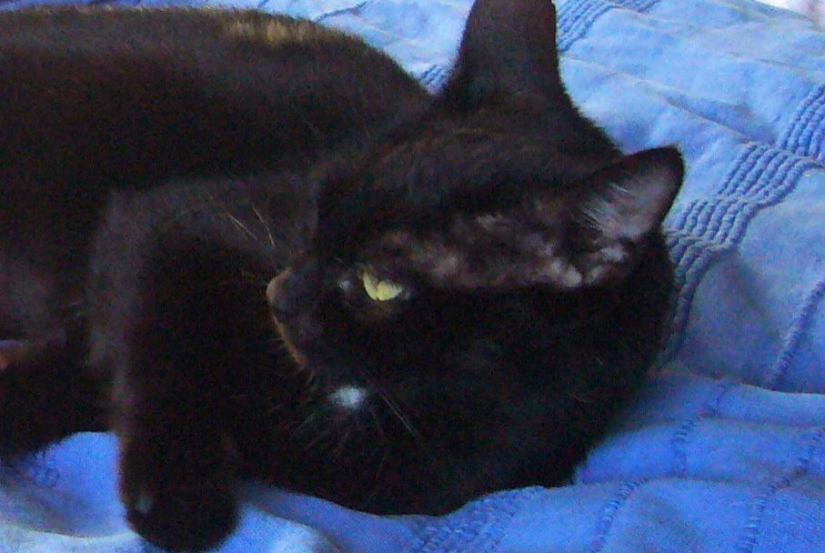 Disappearance alert Cat Female , 8 years Rayol-Canadel-sur-Mer France
