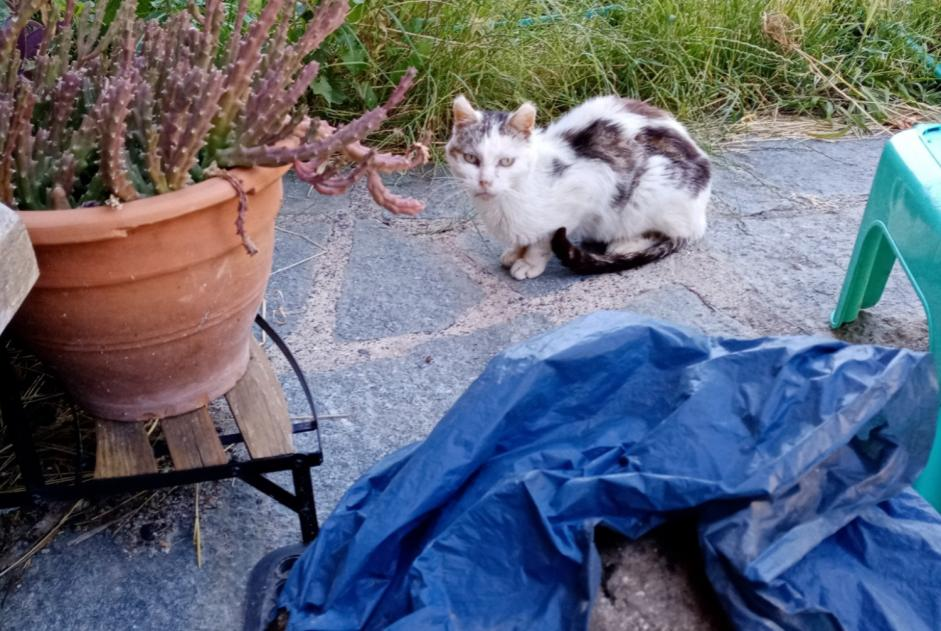 Discovery alert Cat Unknown , 5 years Vals-les-Bains France
