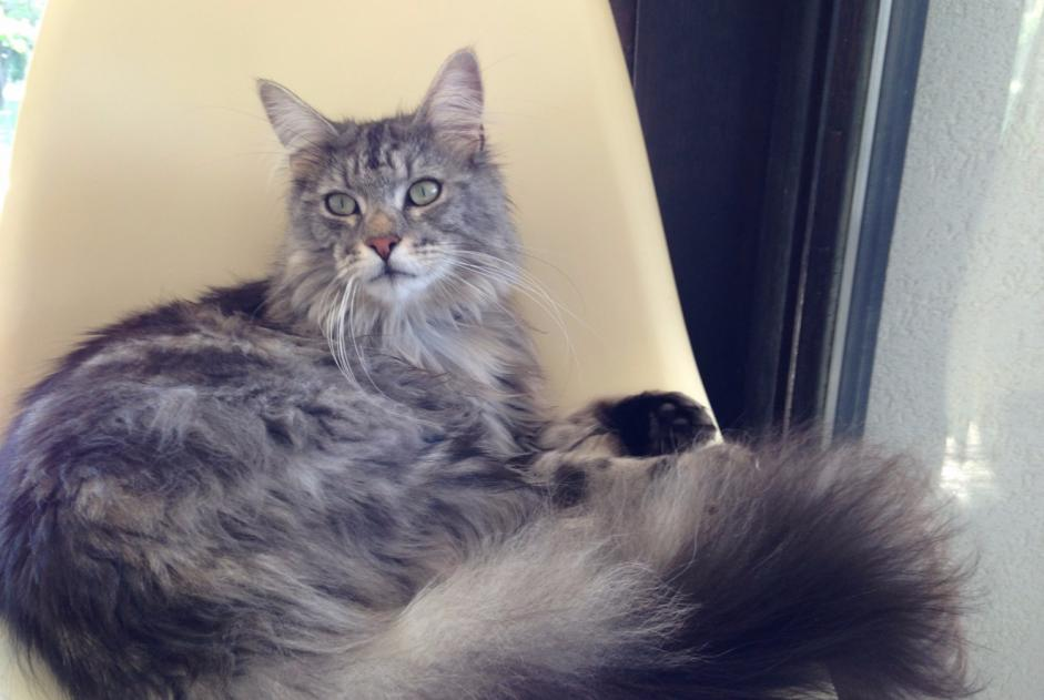 Disappearance alert Cat  Male , 2 years Thonon-les-Bains France