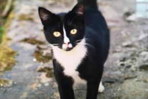 Disappearance alert Cat Female , 1 years Vielle-Adour France