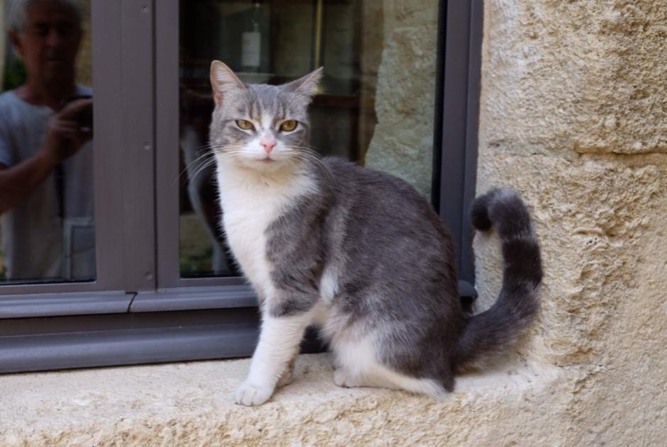Discovery alert Cat Female , 2 years Saint-Siffret France