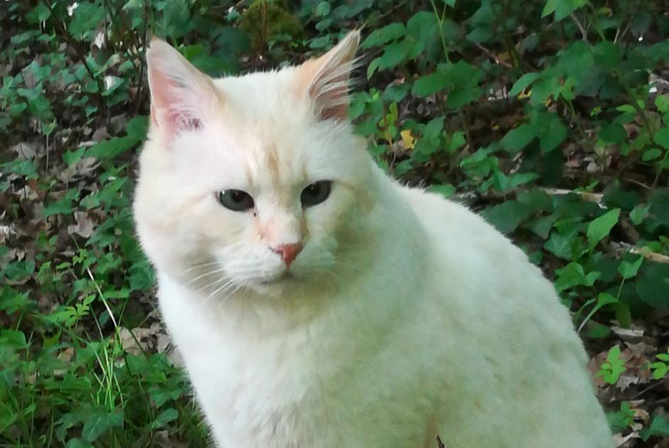 Disappearance alert Cat Male , 12 years Hayange France