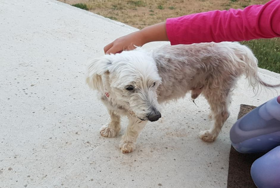 Discovery alert Dog Male , 15 years Brignoles France