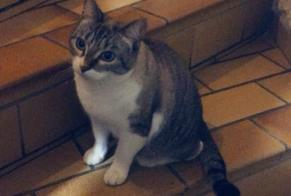 Disappearance alert Cat  Female , 6 years Bailleau-Armenonville France