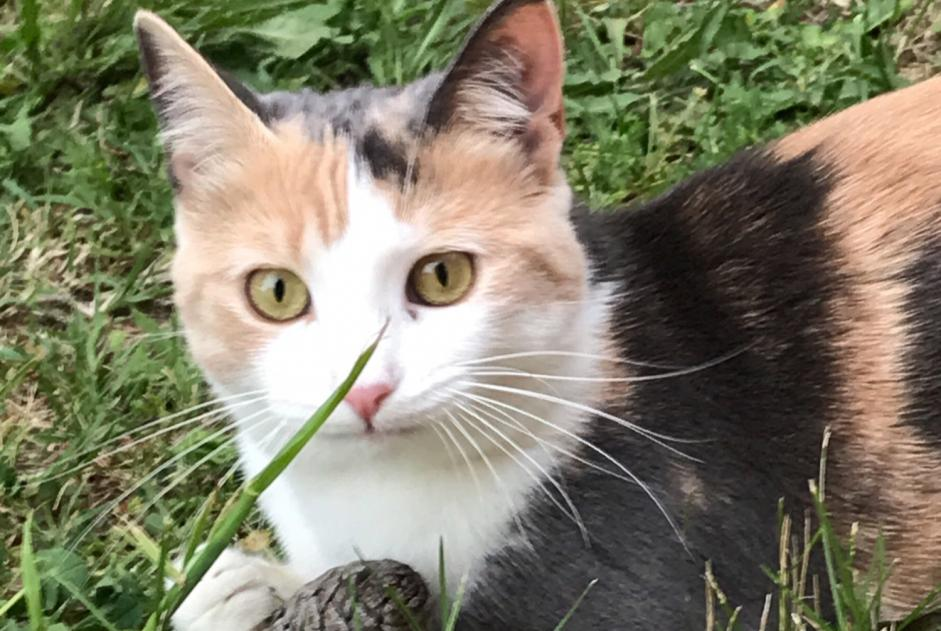 Disappearance alert Cat miscegenation Female , 1 years Aix-en-Provence France