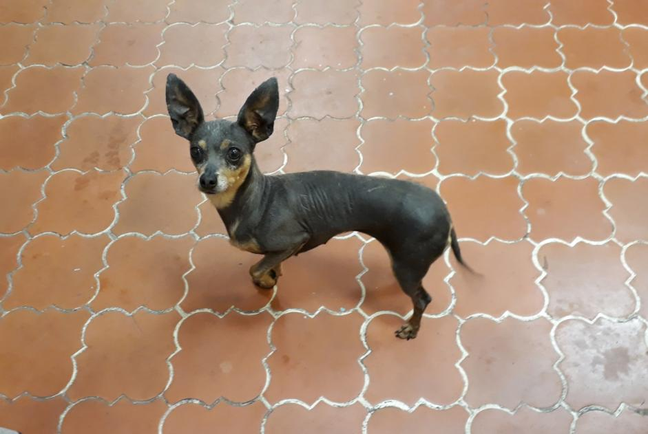 Discovery alert Dog  Female , 8 years Marseille 15e Arrondissement France