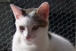 Discovery alert Cat miscegenation Unknown , 2 years Dijon France