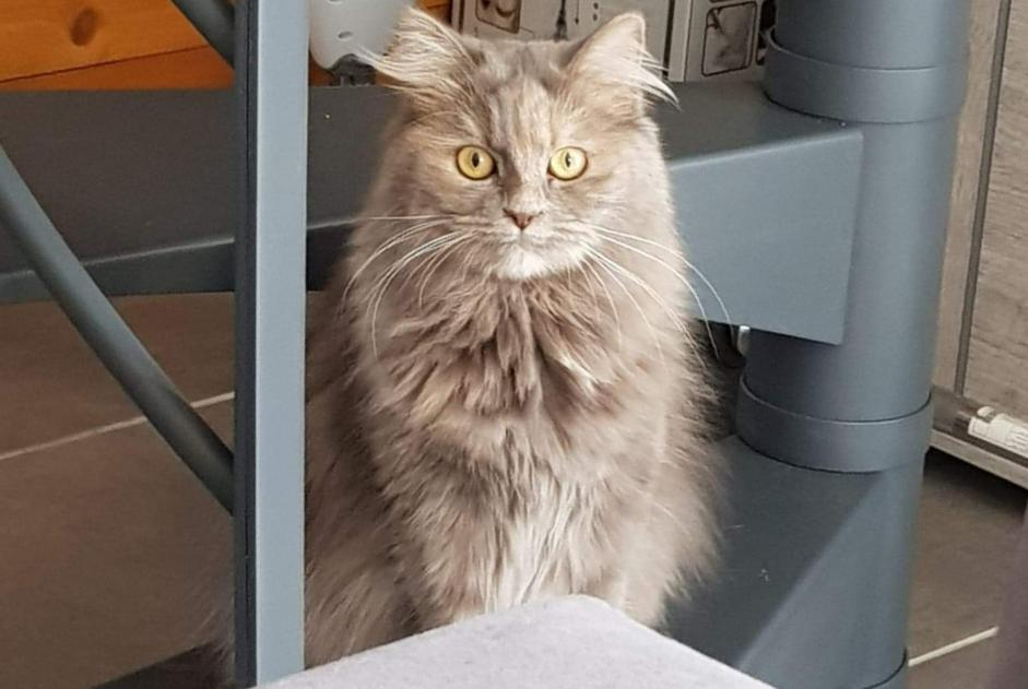 Disappearance alert Cat Female , 3 years Laval-Pradel France