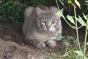 Discovery alert Cat Male , 9 years Pamiers France