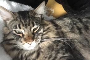 Disappearance alert Cat  Male , 0 years Limoges France