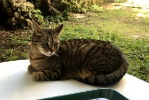Disappearance alert Cat miscegenation Female , 6 years Limoges France