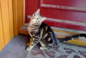 Discovery alert Cat Unknown , Between 7 and 9 months Belfort France