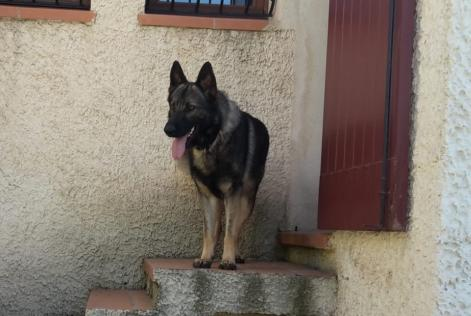 Disappearance alert Dog  Male , 1 years Arles France