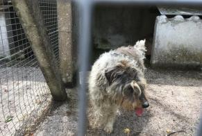 Discovery alert Dog miscegenation Male , 13 years Bussière-Galant France