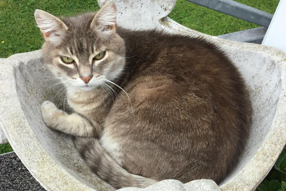 Disappearance alert Cat Female , 4 years Petit-Réderching France