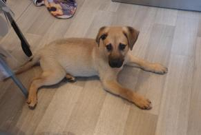 Discovery alert Dog miscegenation Male , Between 4 and 6 months Tarbes France