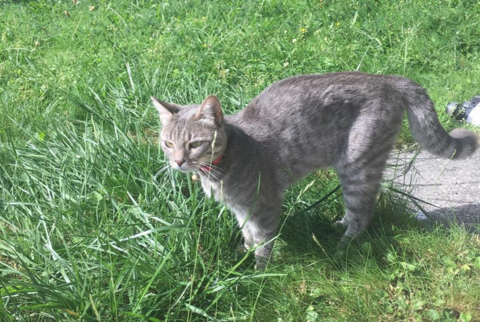 Discovery alert Cat Female , 1 year Aigueblanche France
