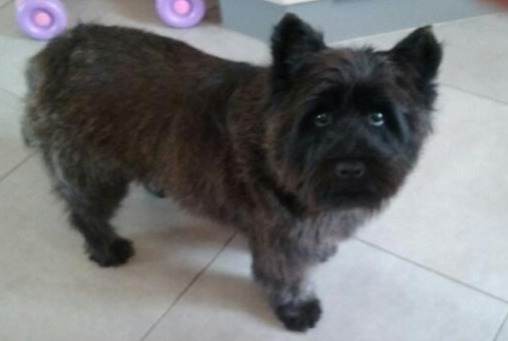 Disappearance alert Dog  Male , 5 years Trédion France