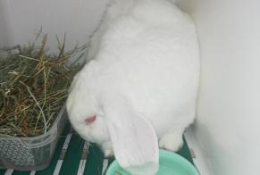 Discovery alert Rabbit Male Meudon France