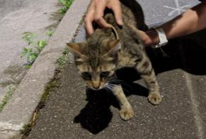 Discovery alert Cat Female , 2 years Issy-les-Moulineaux France