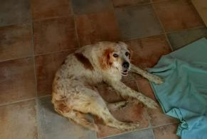 Discovery alert Dog  Female , 12 years La Couvertoirade France
