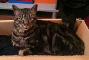 Disappearance alert Cat  Male , 15 years Moussan France