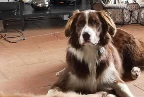 Disappearance alert Dog miscegenation Male , 2 years Camarès France