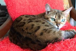 Disappearance alert Cat Female , 7 years Soual France