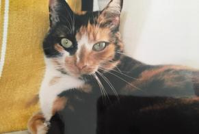 Disappearance alert Cat  Female , 5 years Margès France