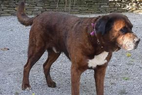 Discovery alert Dog Male , 10 years Piégros-la-Clastre France