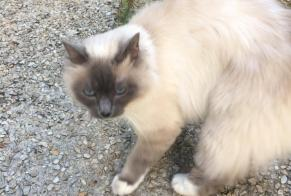 Discovery alert Cat  Unknown , 2 years Angers France