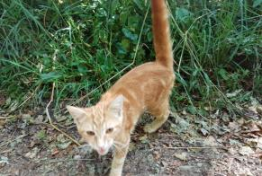 Discovery alert Cat Male , Between 4 and 6 months Morvillars France
