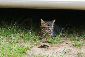 Discovery alert Cat Unknown , Between 1 and 3 months Royan France