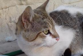Discovery alert Cat Male , 2 years Carpentras France