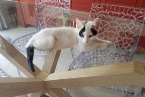 Discovery alert Cat miscegenation Female , Between 4 and 6 months Porto-Vecchio France