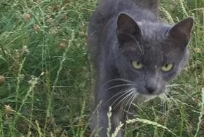 Discovery alert Cat miscegenation Unknown , 1 year Marigné-Peuton France