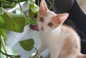 Discovery alert Cat Unknown , Between 1 and 3 months Feurs France