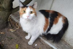 Discovery alert Cat  Female , 2 years Roanne France