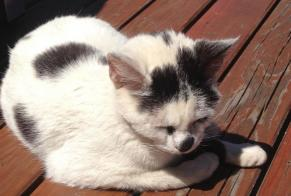 Discovery alert Cat Female , Between 4 and 6 months Saint-Jean-Soleymieux France