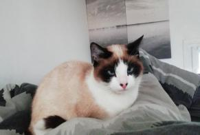 Disappearance alert Cat miscegenation Female , 1 years Nanterre France