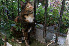 Disappearance alert Cat Female , 5 years Verneuil-sur-Seine France