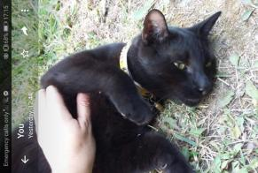 Disappearance alert Cat Male , 4 years Velleron France