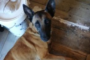 Discovery alert Dog  Female , 6 years Usson-en-Forez France
