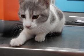 Discovery alert Cat Female , Between 4 and 6 months Avignon France