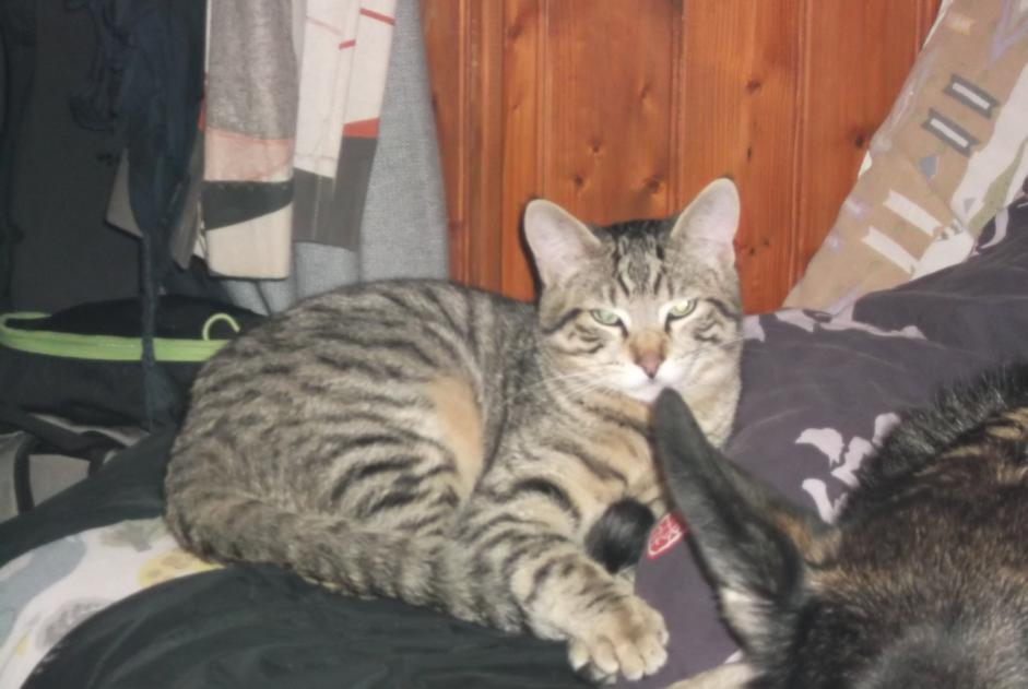Disappearance alert Cat  Male , 10 years Vouvray France