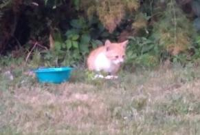 Discovery alert Cat Unknown , Between 1 and 3 months Saverdun France